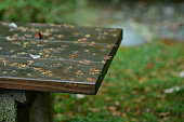 Wet Garden Bench and Japanese Maple Leaves