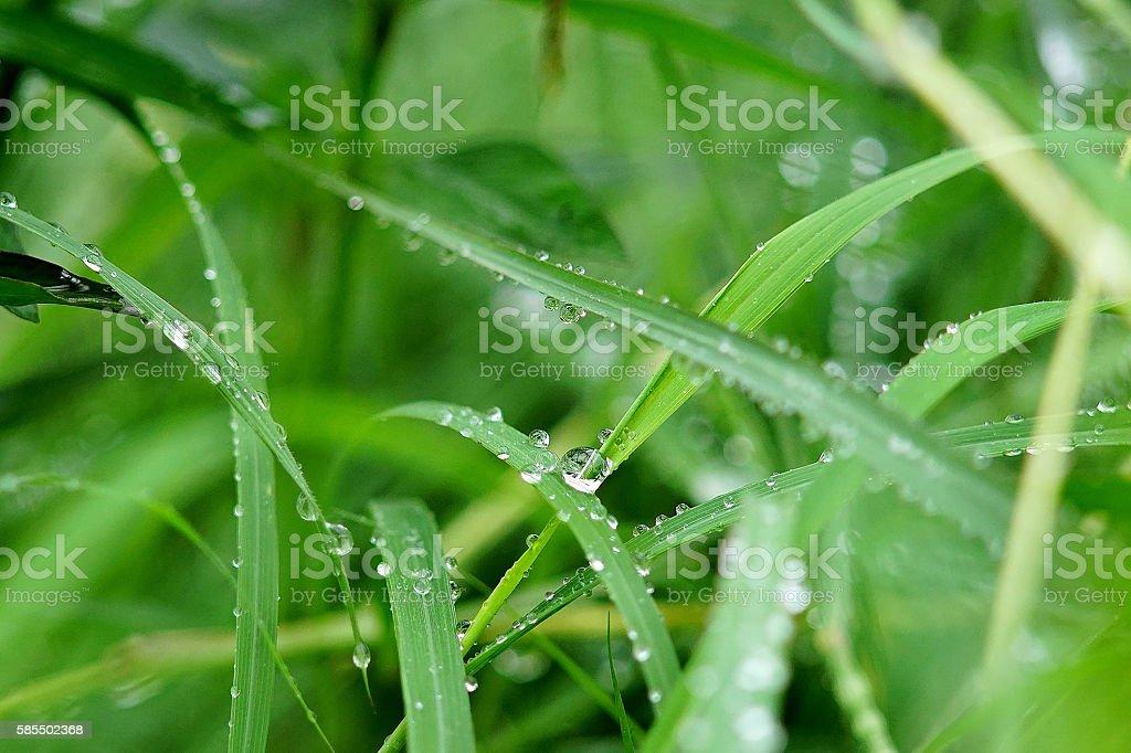 wet grass after the rain stock photo