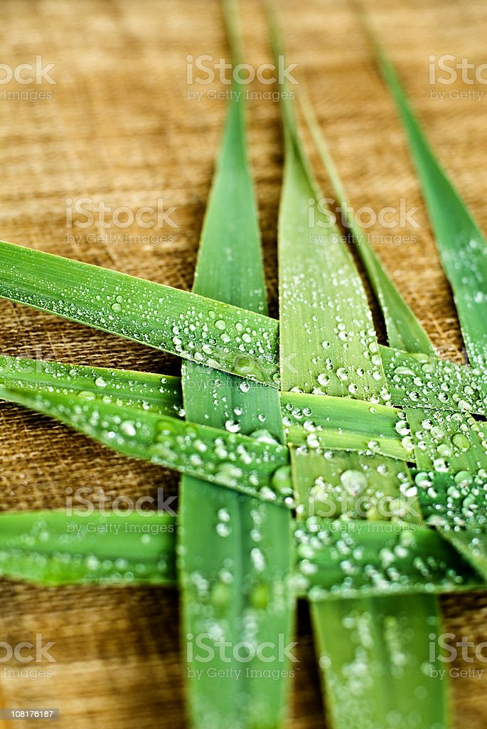 Wet Grass Woven Together royalty-free stock photo