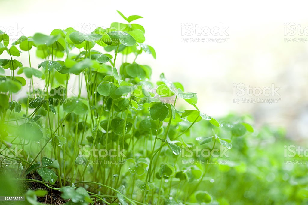 wet green grass royalty-free stock photo