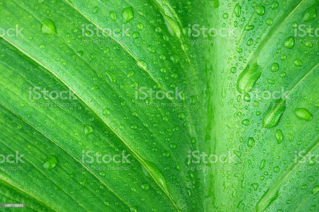 Wet green leaf close-up royalty-free stock photo