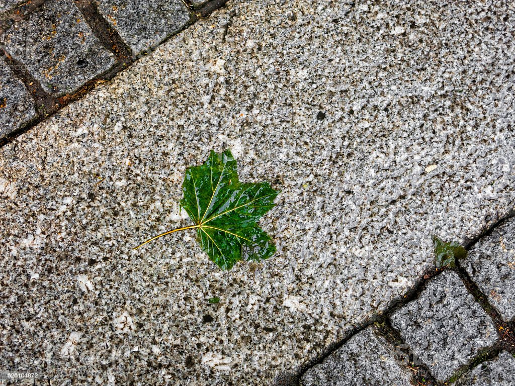 Wet green leaf on pavement stock photo