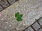 Wet green leaf on pavement