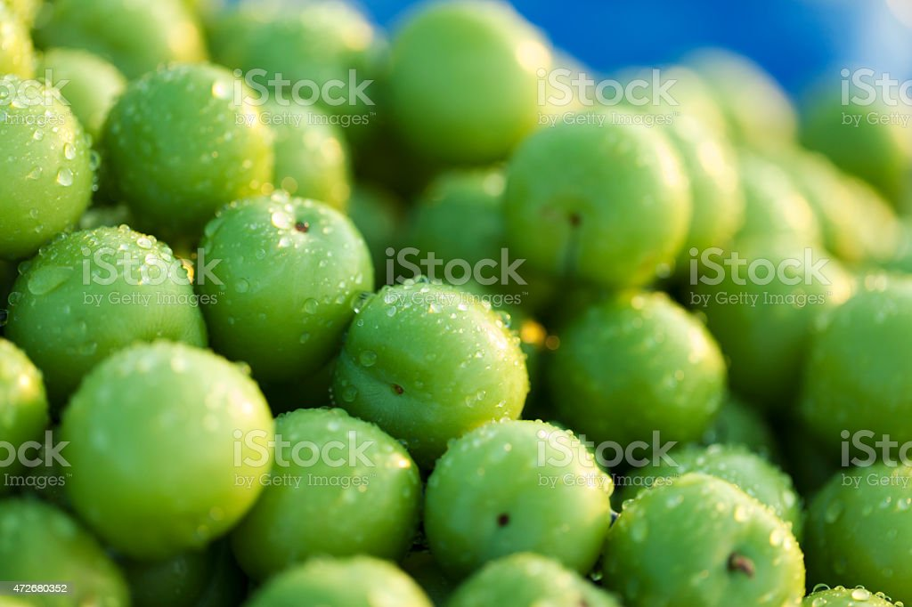 Wet Green Plums stock photo