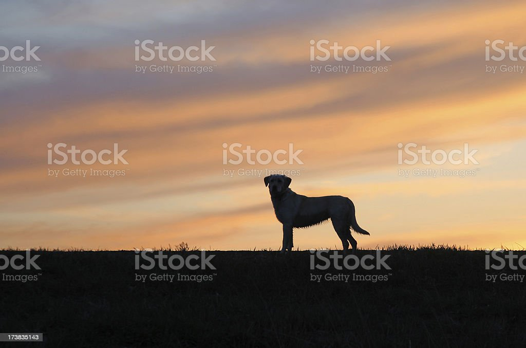 wet lab silhouette royalty-free stock photo