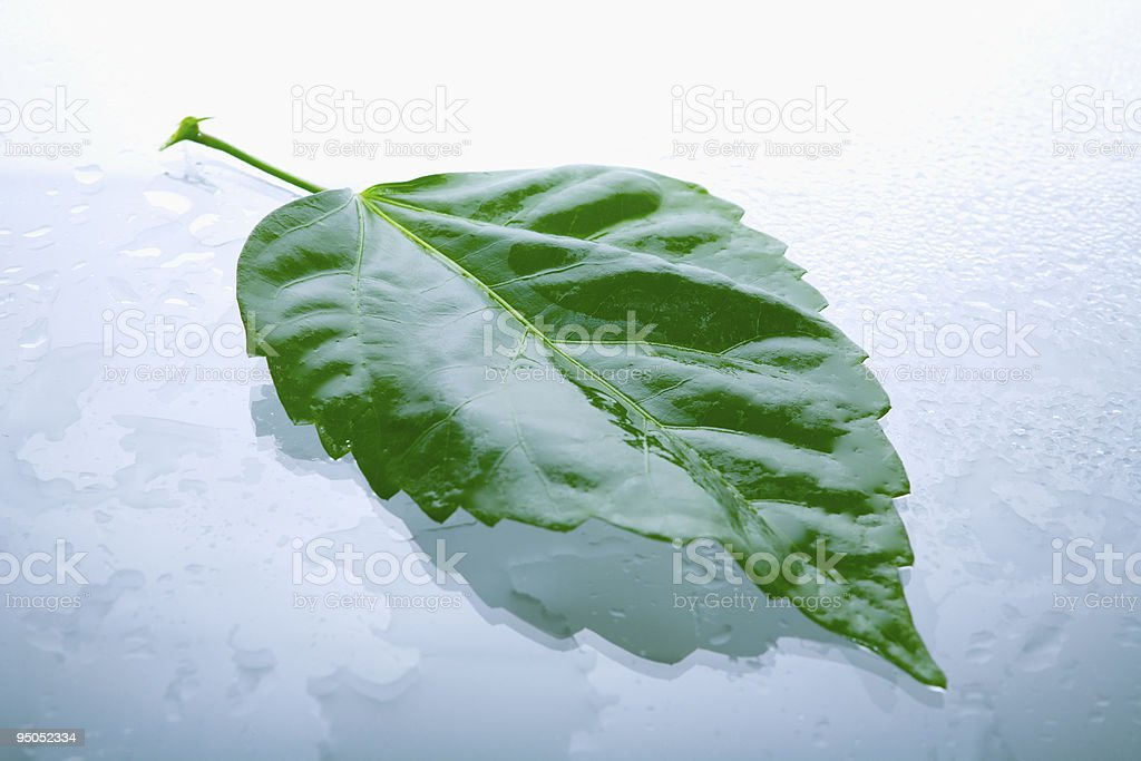Wet Leaf With Water Drop Background royalty-free stock photo