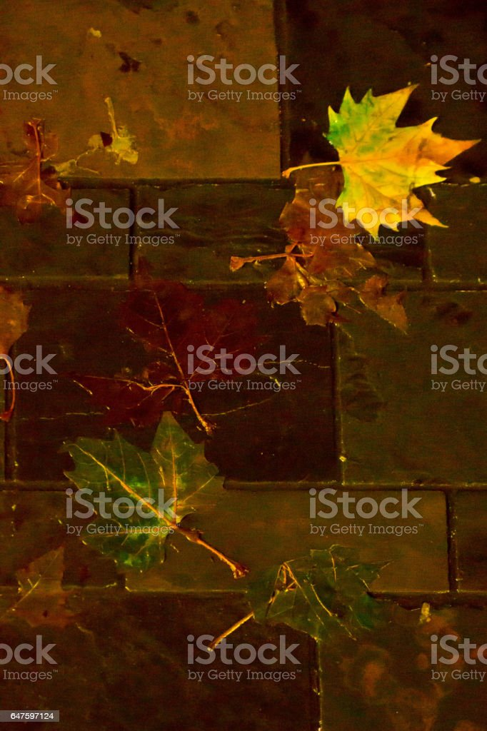Wet leaves at night stock photo