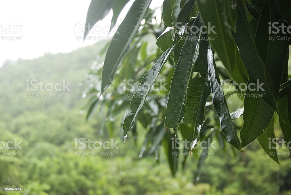 wet leaves in rain royalty-free stock photo