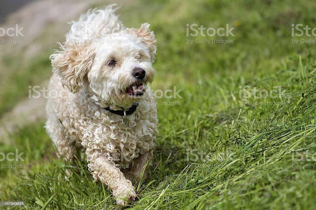 Wet mixed breed dog stock photo