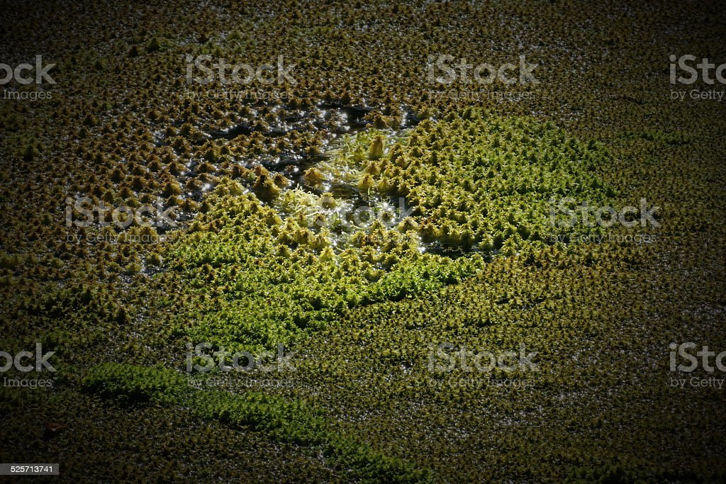 Wet Moss stock photo