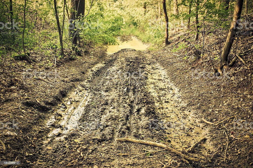 Wet Mud Path With Tire Track Into The Forest stock photo