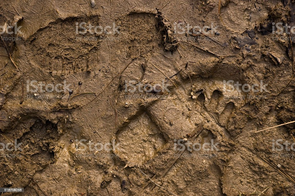 wet mud with footprints stock photo