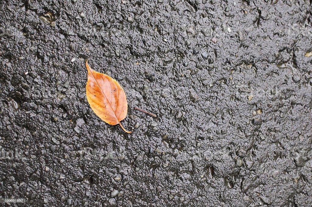 Wet orange brown leaf on concrete stock photo