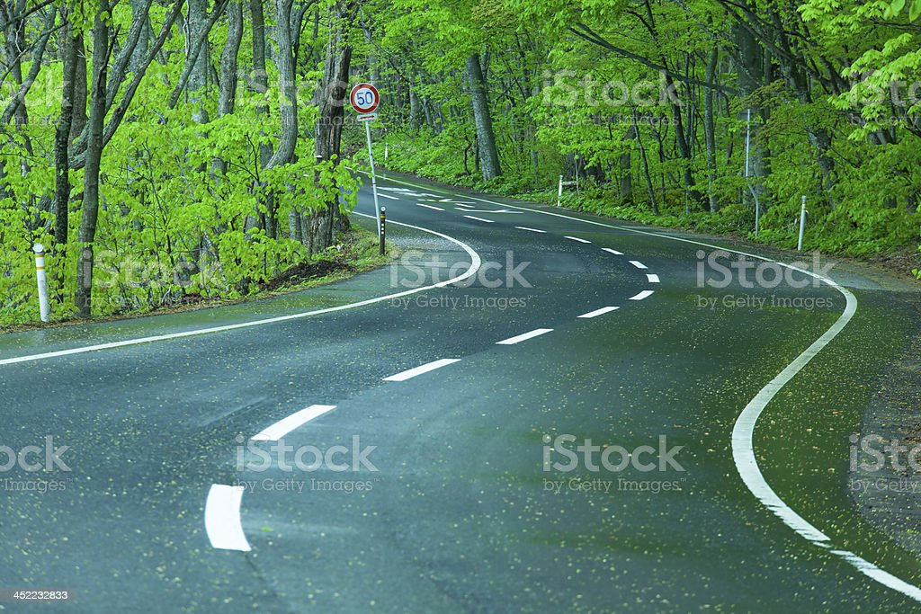 Wet road in a green forest royalty-free stock photo