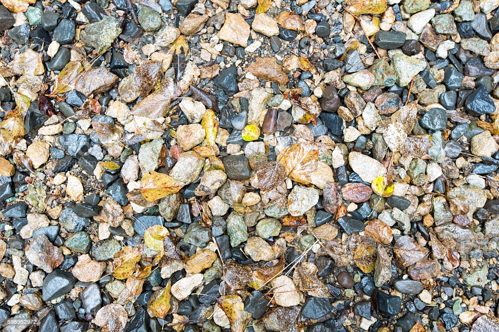 Wet Small Rocks and Fallen Leaves for Backgrounds stock photo