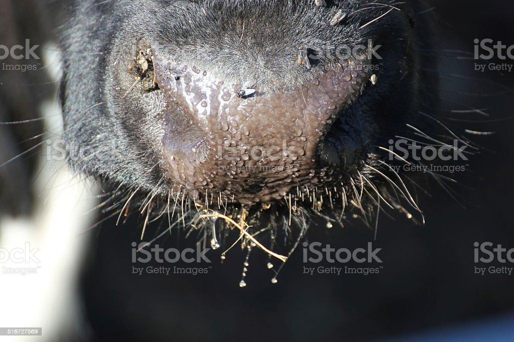 Wet Snout stock photo