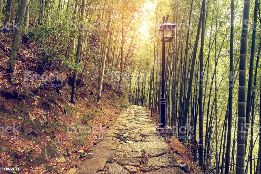 Wet stone path in the bamboo forest. stock photo