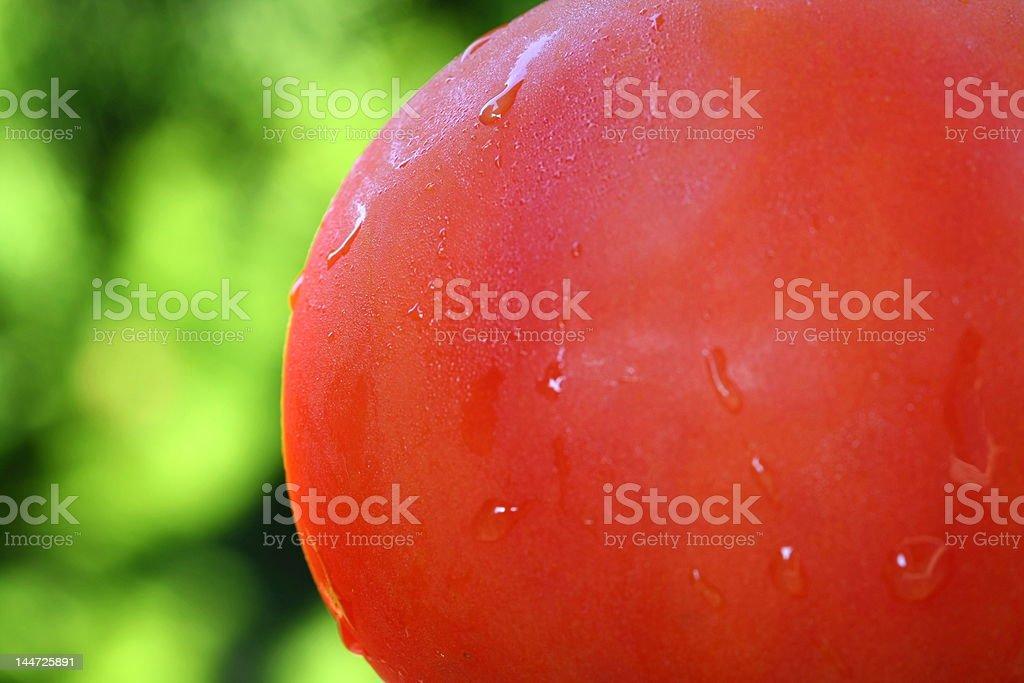 wet tomato royalty-free stock photo