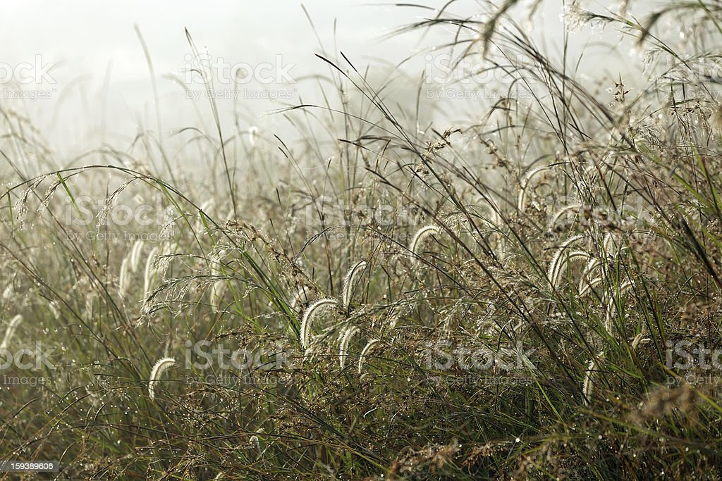 Wet tropical meadow royalty-free stock photo