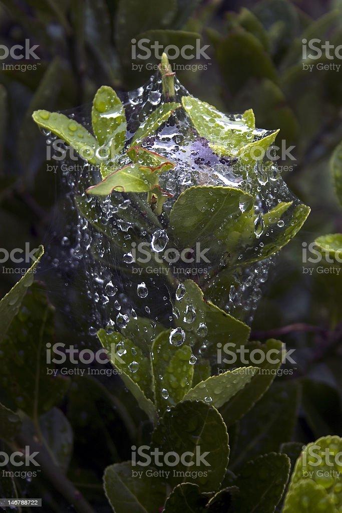 wet web plant stock photo