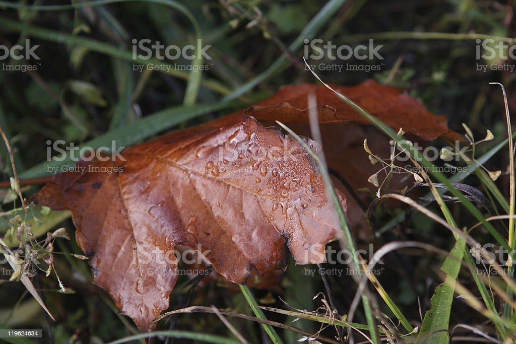 wet wilted leaf in grass stock photo