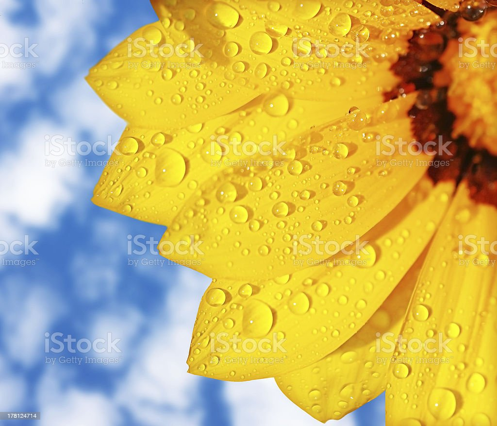 Wet yellow flower background stock photo