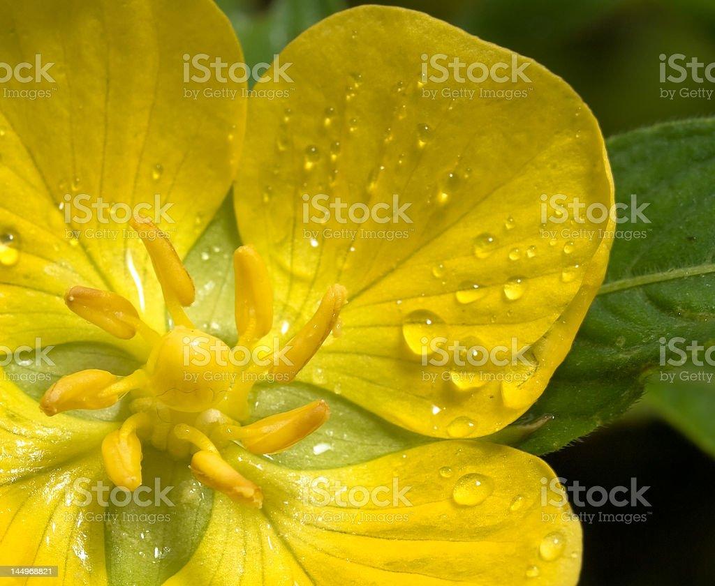 Wet Yellow Flower royalty-free stock photo