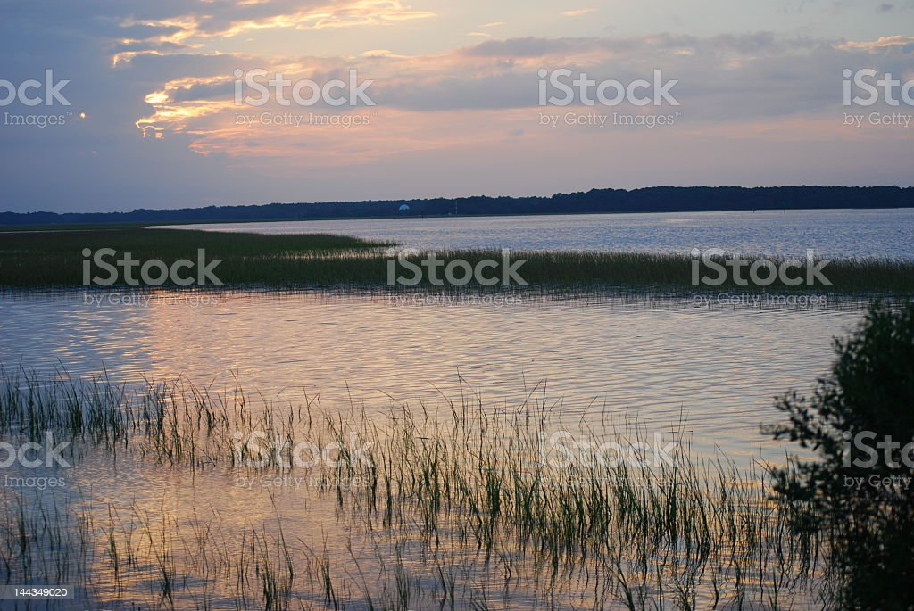A wetland area with reeds in the water taken at sunset stock photo