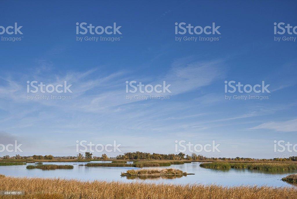 Wetland at the Refuge stock photo