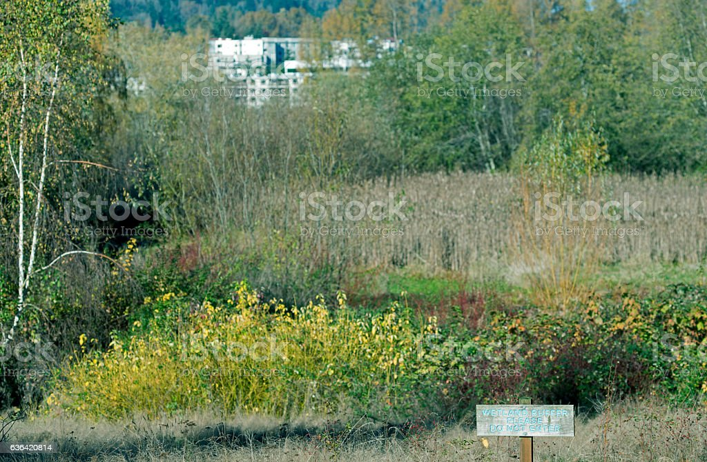 Wetland buffer at city park on lake in western Washington stock photo