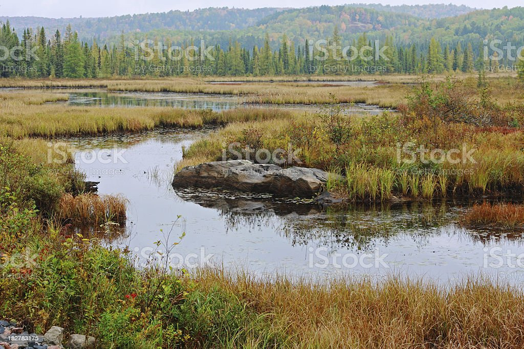 Wetland in Algonquin royalty-free stock photo