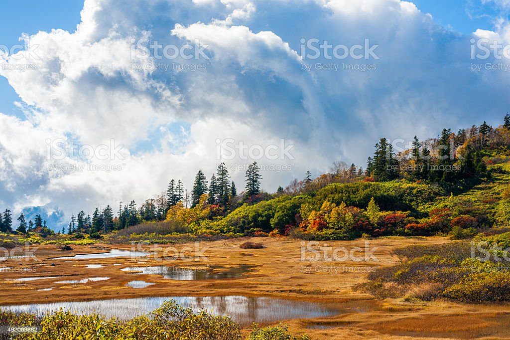 Wetland in autumn color leaf stock photo