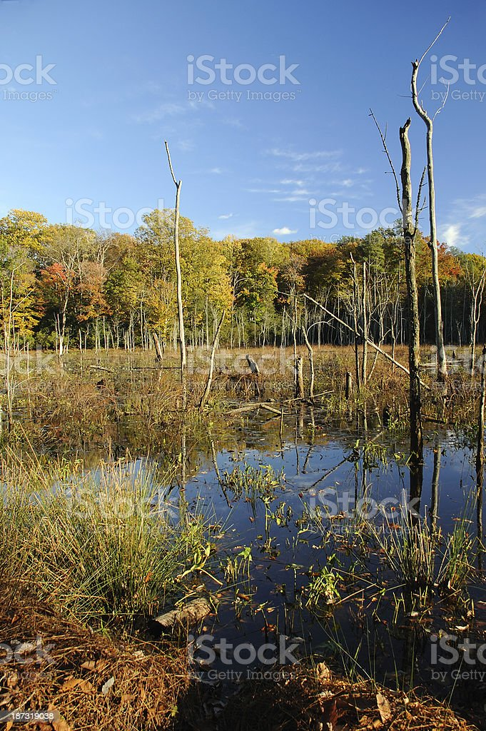Wetland in Fall royalty-free stock photo