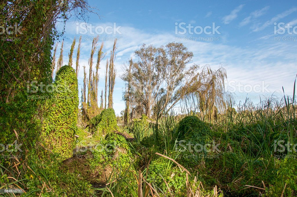 Wetland Landscape in Gwelup stock photo