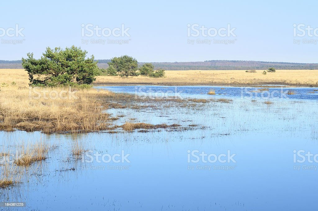 Wetland landscape stock photo
