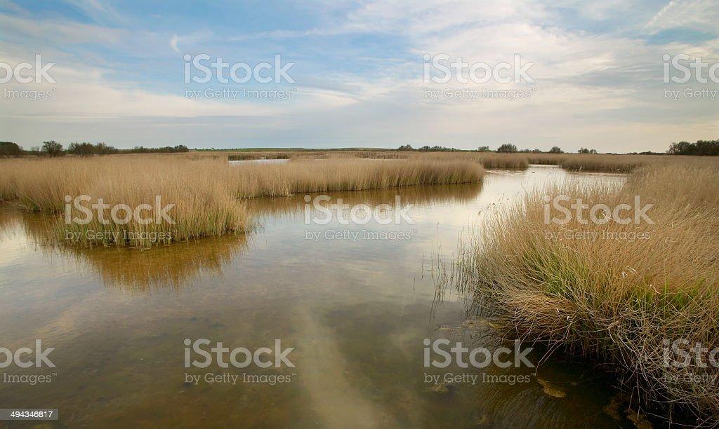 Wetland landscape. Tablas de Daimiel. Ciudad Real. Spain. stock photo