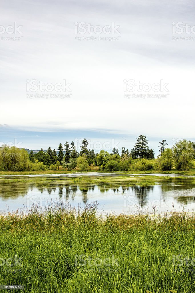 Wetland / Marsh at Sauvie Island, Oregon stock photo