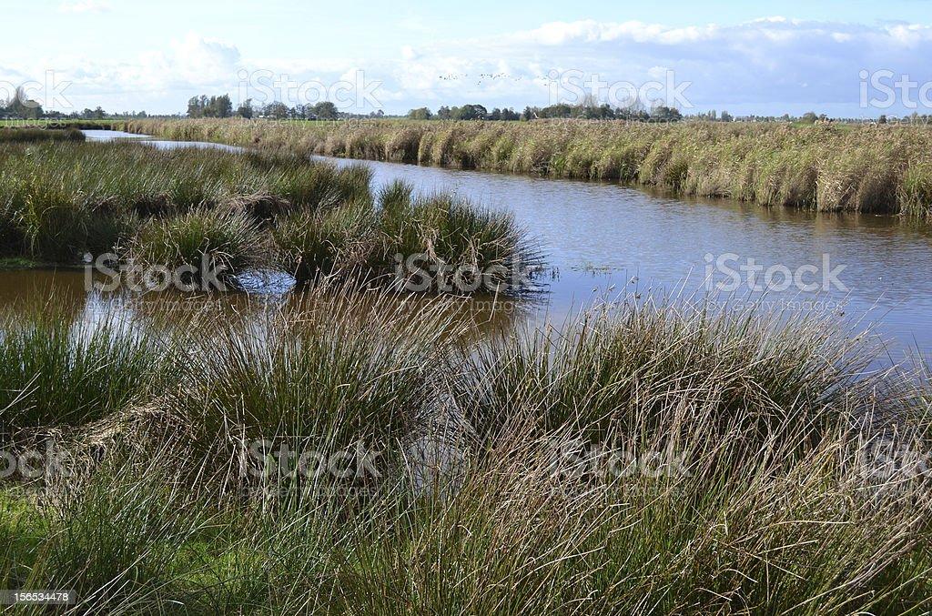 湿地自然保護区、グリーン Jonker 、オランダます。 ロイヤリティフリーストックフォト