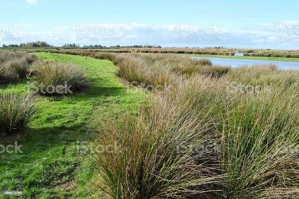湿地自然保護区、グリーン Jonker ます。 ロイヤリティフリーストックフォト