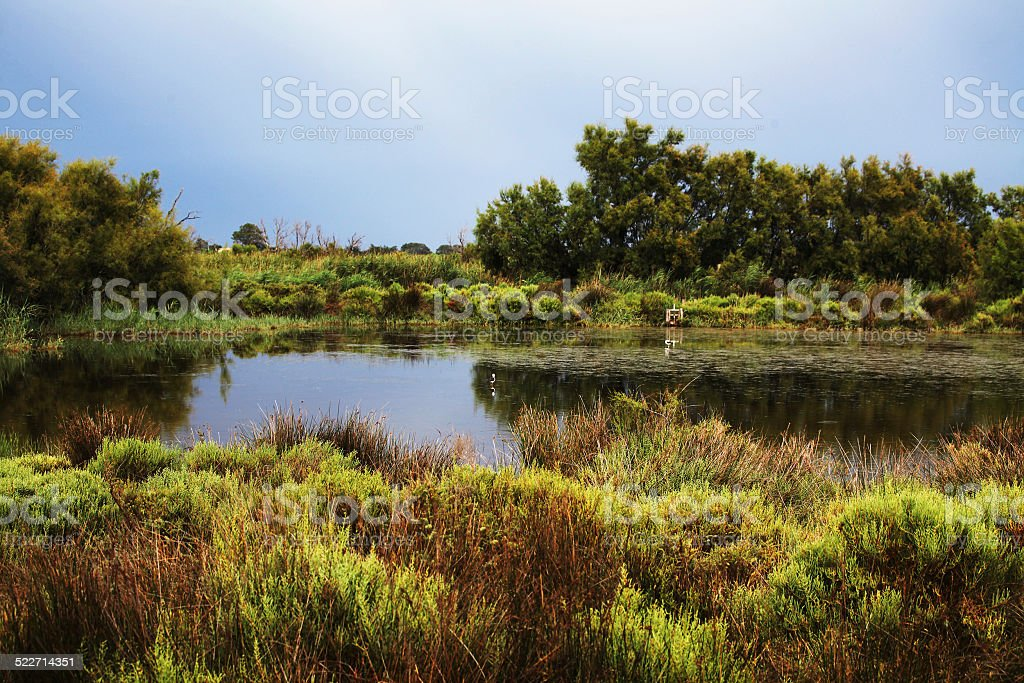 Wetland of the Camargue, France stock photo