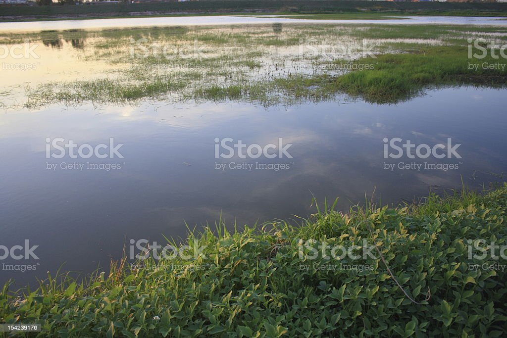 wetland royalty-free stock photo
