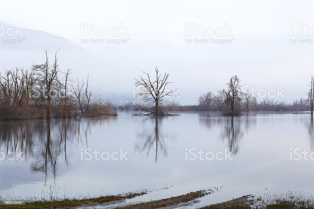 Wetland royalty-free stock photo