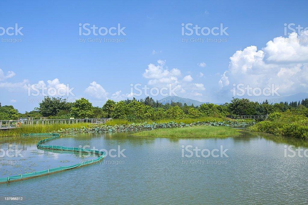 Wetland pond in Hong Kong at day stock photo