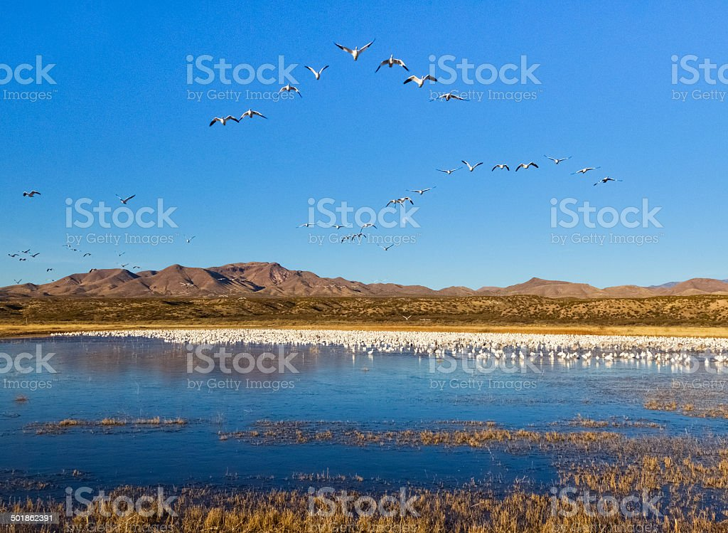 Wetland Scene royalty-free stock photo