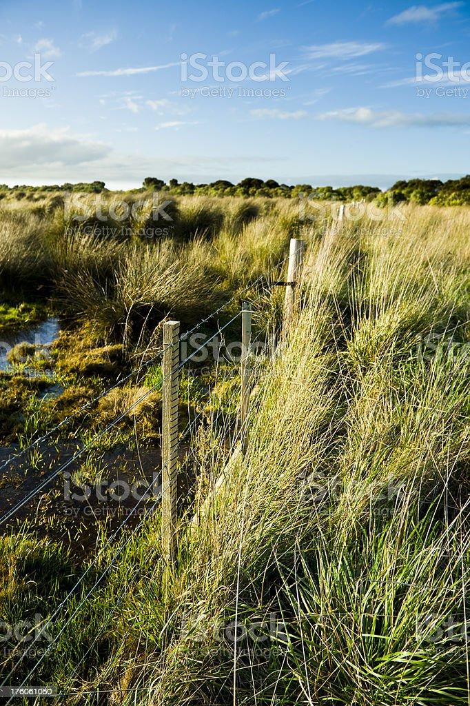 Wetland swamp marsh grass tufts stock photo