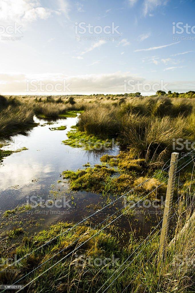 Wetland swamp stock photo
