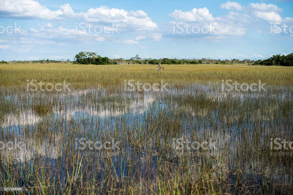 Wetland Swamps and Clouds stock photo