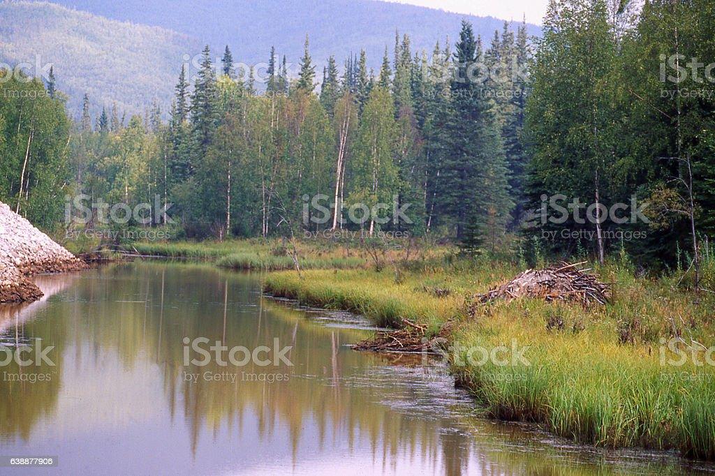 Wetlands and beaver pond in summer north of Fairbanks Alaska stock photo