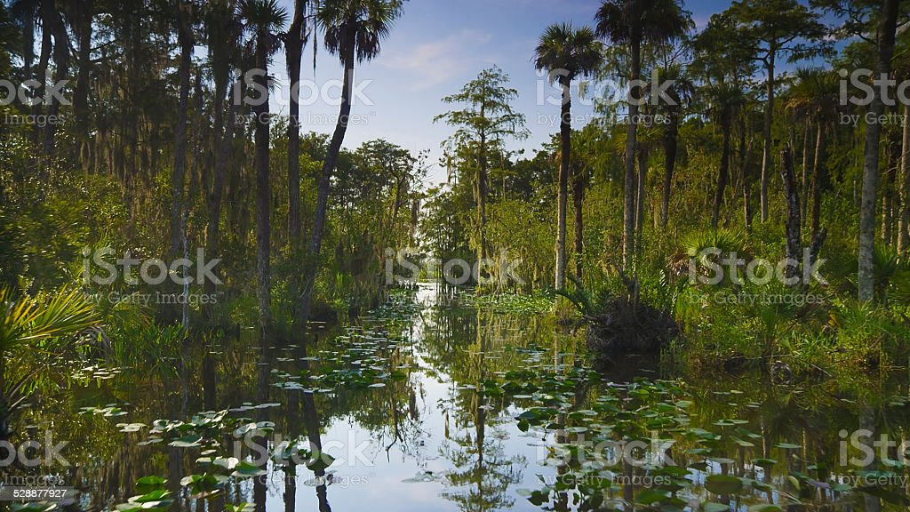 Wetlands and Swamp Territory in Big Cypress National Preserve stock photo
