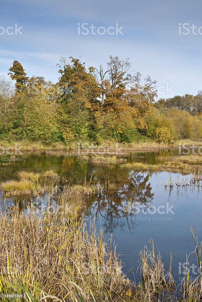 Freshwater Marsh in the Fall royalty-free stock photo